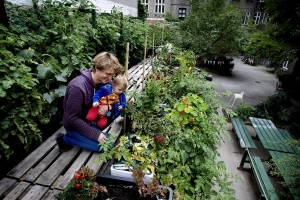 Urban farming CPH
